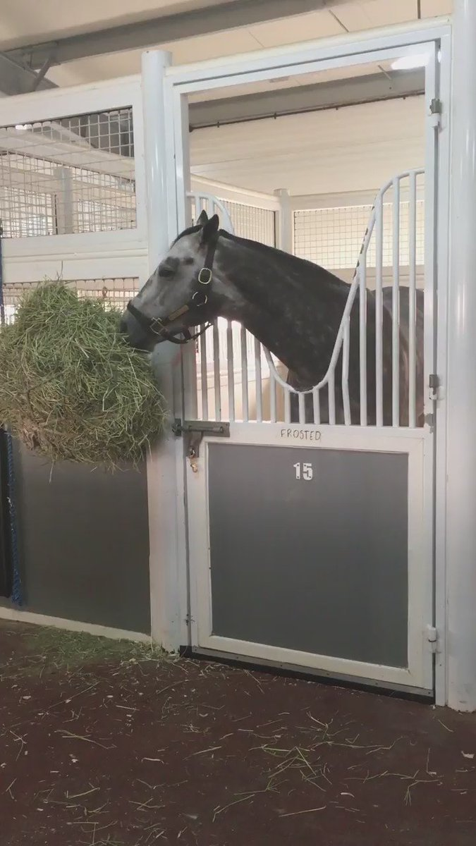 Trainer #KiaranMcLaughlin said '#Frosted is doing fabulous after his race. He is thriving in #Dubai.' https://t.co/Jtaqcp4P1w