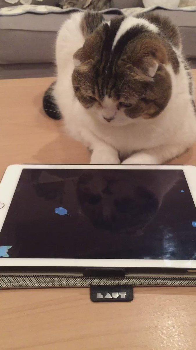 猫じゃらしアプリで遊んでみた。 pic.twitter.com/dyy0tVnw49