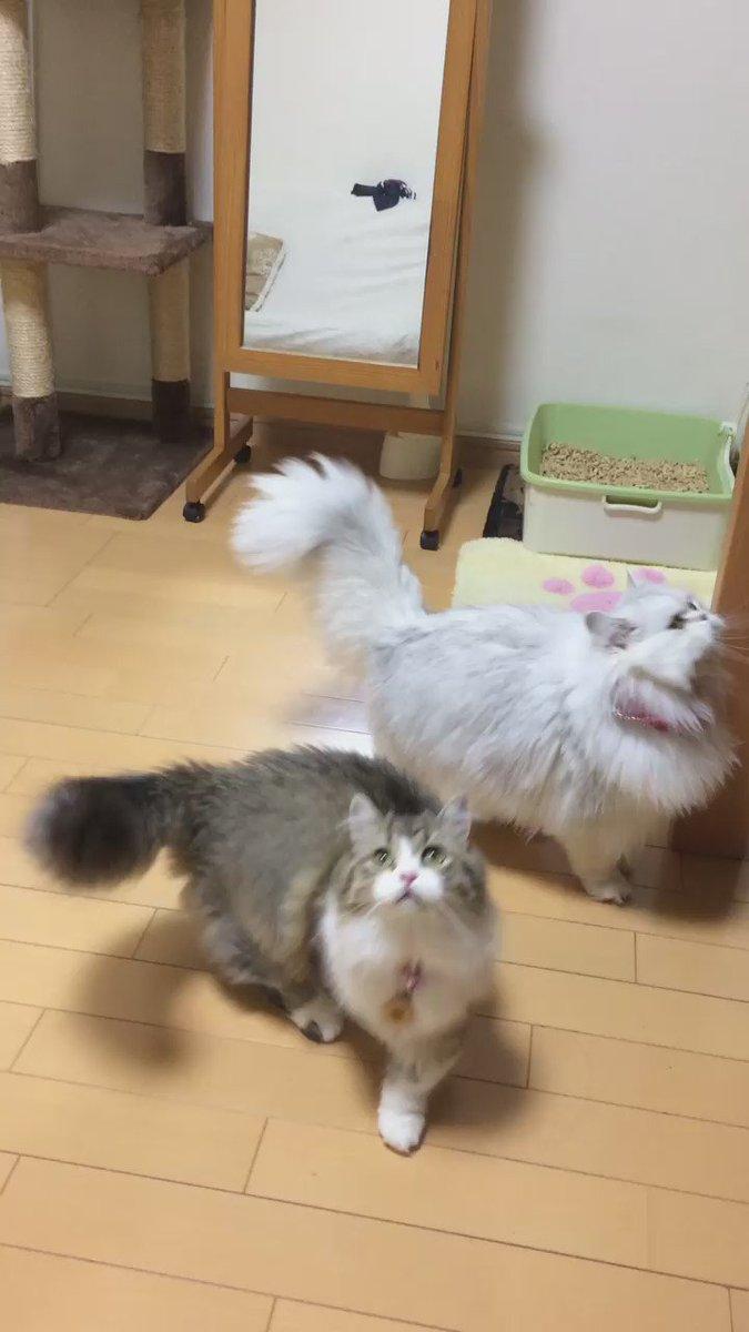 シャボン玉で遊びたいよ〜 pic.twitter.com/KInDzKy8oJ