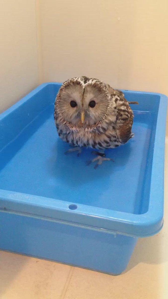 水浴び〜 pic.twitter.com/myCy0d5TWp