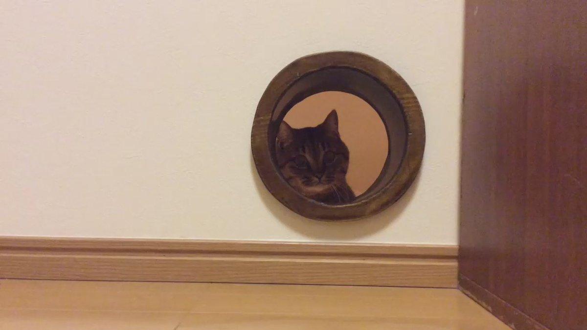 主人が壁に穴開けて「猫トンネル」開通させました! pic.twitter.com/xO8mQk5Mu2