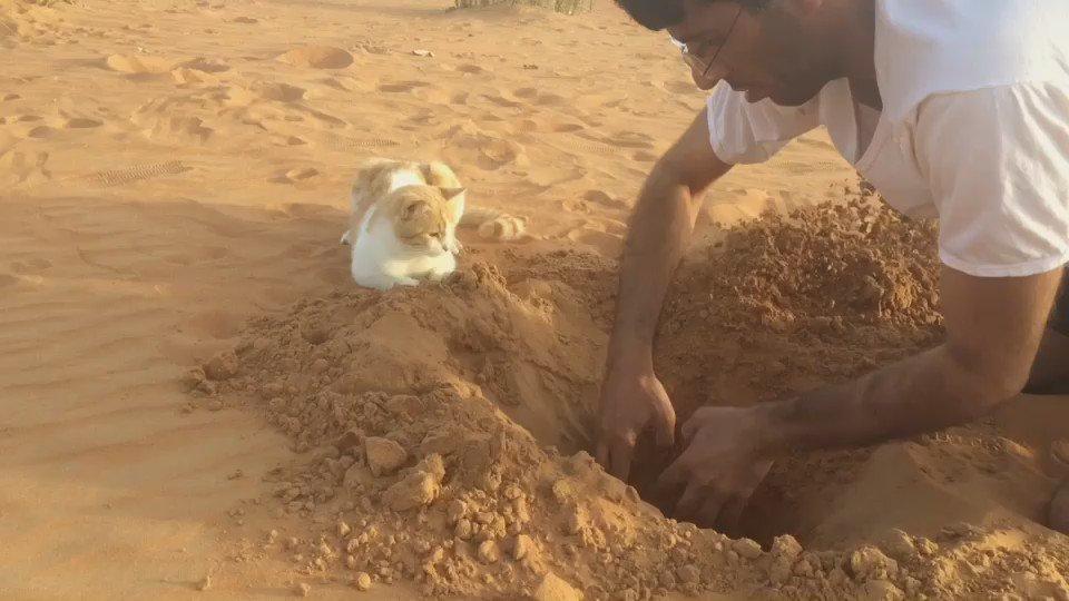 穴掘り共同作業。 pic.twitter.com/UUfvRe0OZ2