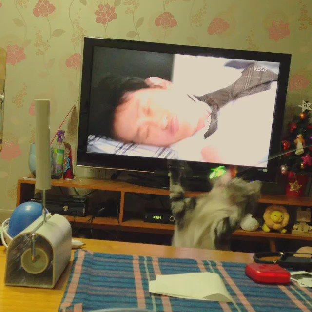 자다가 고양이 노는 소리에 깸 https://t.co/RXyy6Px9wP