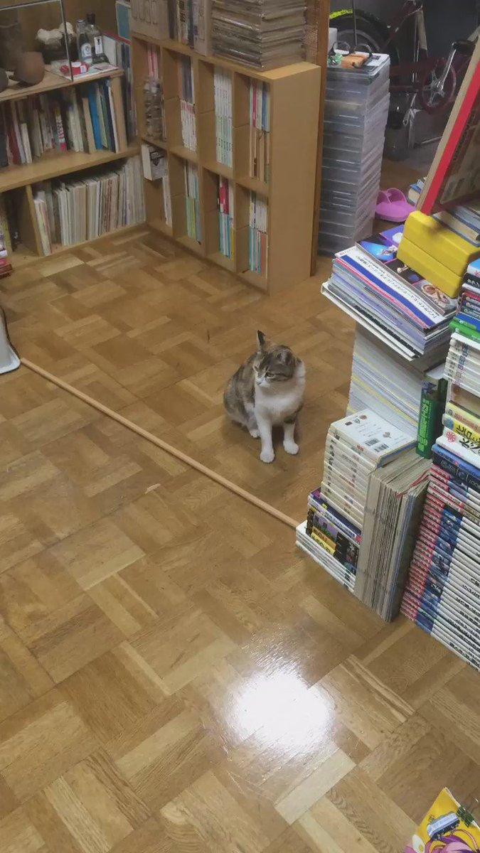 掃除のために玄関開けといたら例のネコが普通に入って来たよ https://t.co/gBDDXHKiaj