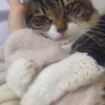 離れようとすると悲しい声で鳴く猫が可愛すぎてエンドレス再生余裕w