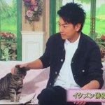 【徹子の部屋】佐藤健の意外な素顔...猫との絡みがかわいすぎる♥♥♥