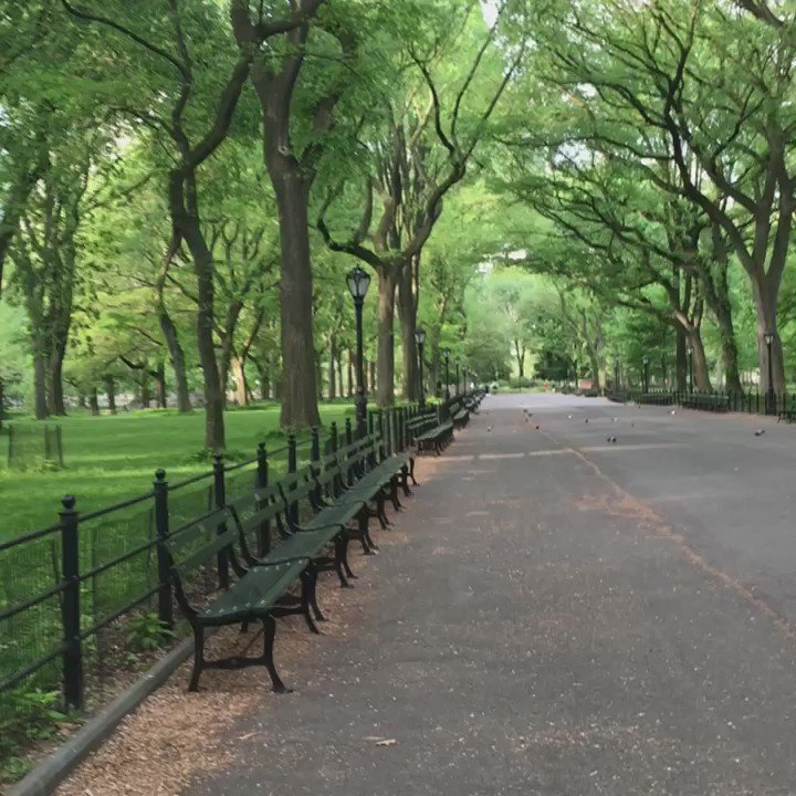 A VERY rare sight in Central Park ~ it's empty! #centralpark #NewYorkCity https://t.co/egLubWOegu