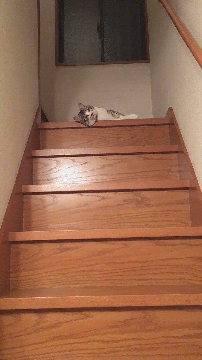 うちの猫#猫 pic.twitter.com/2cXiwV8EeU