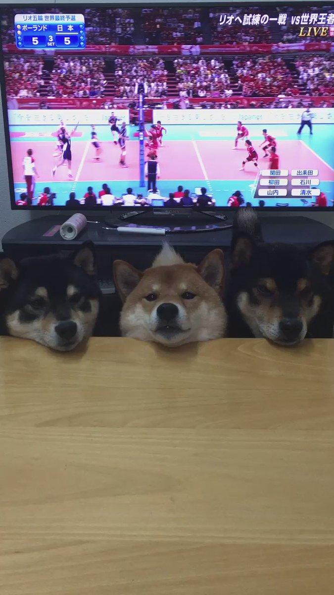 うちの3枚ブロック#柴犬 #shiba pic.twitter.com/AClF9AKSh9