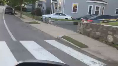 VIDEO: Moose spotted in Watertown this morning before heading into Belmont. https://t.co/buZeugCUDv