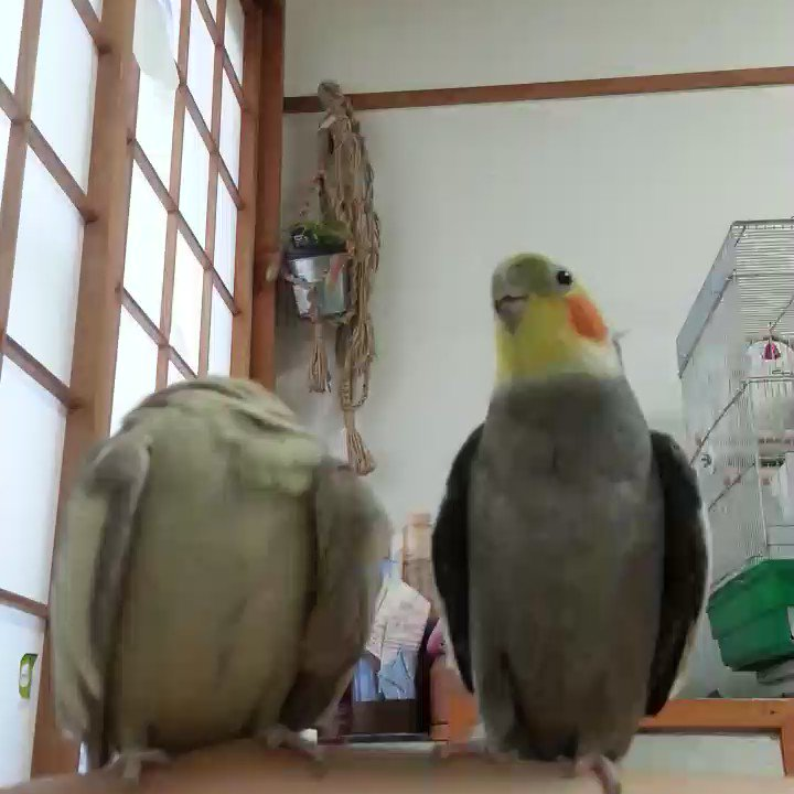 激かわ動物's photo on toufu