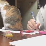 この女子高生が勉強に集中ができない理由がこれっ....いや可愛すぎるでしょ!