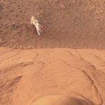 砂漠の砂に挑み続けるニャンコひたすら掘り続ける姿が超カワイイ♥