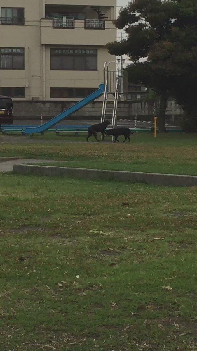 公園で犬がすべり台してました 笑 pic.twitter.com/BfvCNZ83Kp