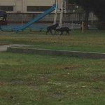 これって中に人間が入ってるの?!滑り台で遊ぶ犬が現る!