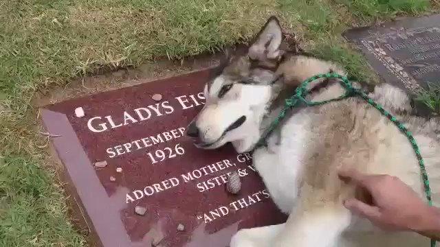 飼い主のお墓の前で泣く犬がかわいそうで、感動的。