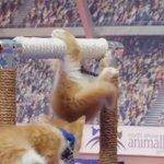 東京オリンピック以上に盛り上がる?猫だらけの東京ネコリンピック!