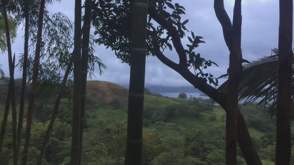 5am wake up to birds and animal sounds #costarica #birds #monkeys #lifeexperienced #jungle #tent #volcano #arenal https://t.co/vsJrP3uSxO