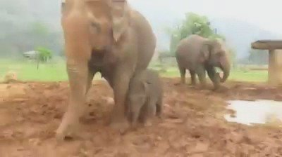 Such happiness <3 #Elephants #Babyele pic.twitter.com/M99ANK8KrX