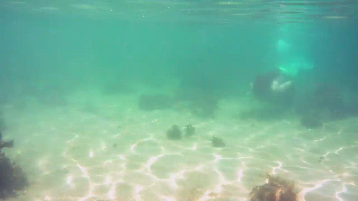 泳いでみた動画第2弾デキタヨー(*´∀`) フルはYouTubeで! https://t.co/emfqofbv6R  #アリエル #Dハロ仮装 #水中撮影 #マーメイドスイム https://t.co/JUUSgXo1GO