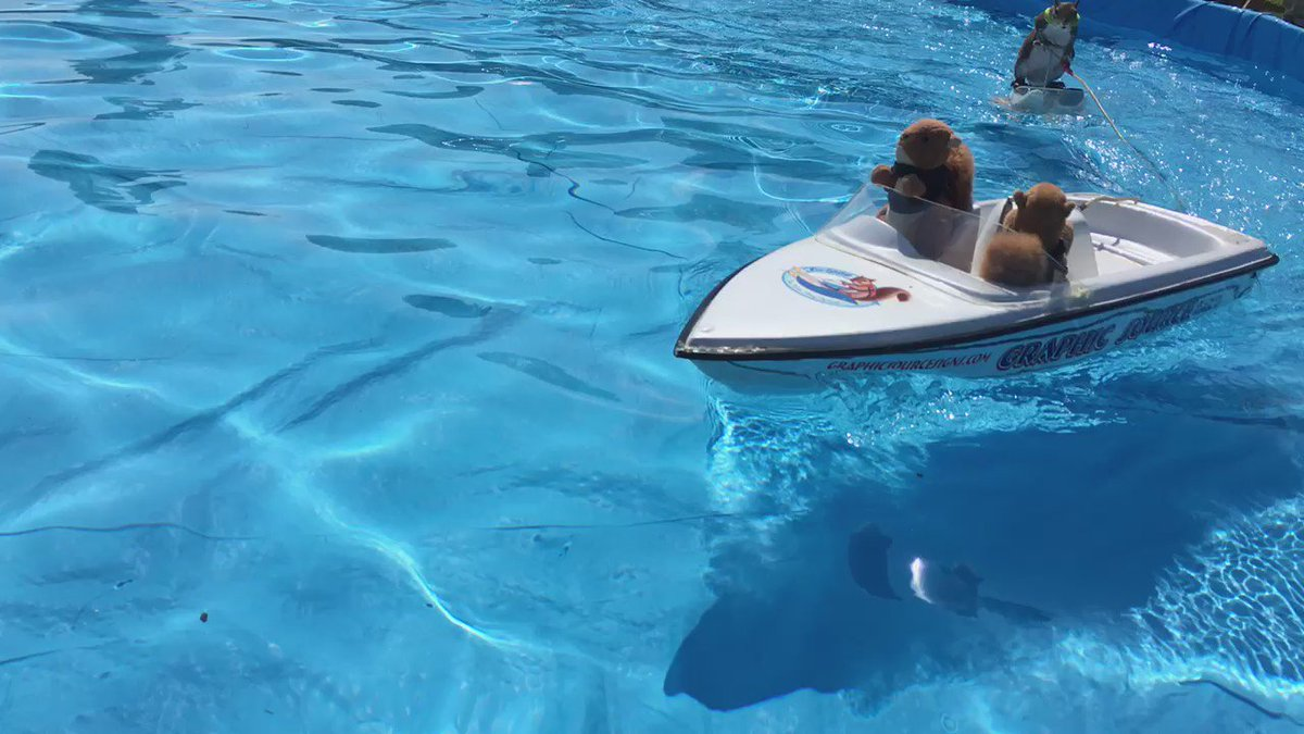Twiggy the water skiing squirrel comes to Wilmington for the boat show this weekend! https://t.co/wiZ2Iecj6s