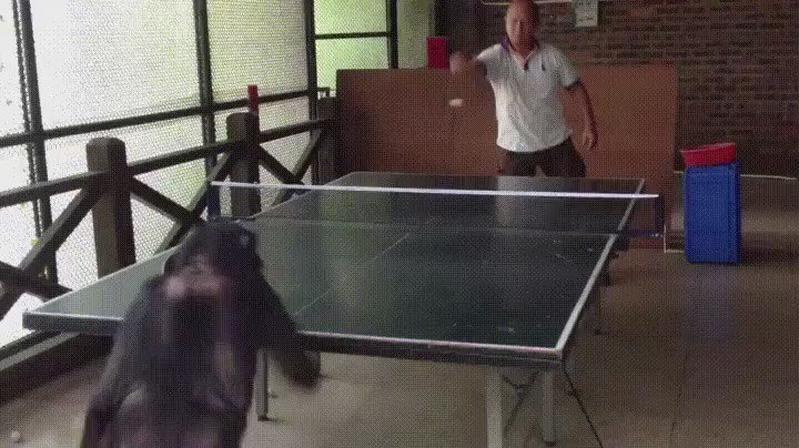 This video of chimpanzee playing Ping Pong is  amazing! Still better than lot of us! https://t.co/tPjan5Iqm3