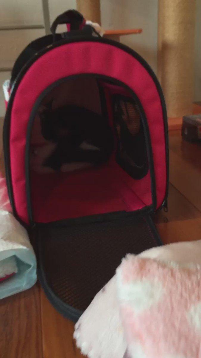 本日うちにやってきた新入り猫ちゃん、まだ出てきません。 https://t.co/OJNfY26ELU