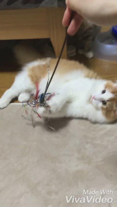 ハッスルしすぎて両手両足が出る猫。 https://t.co/e0mIAzNN0X