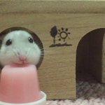 ゼリーを食べるハムスター可愛すぎワロタwwゼリーになりたいwww