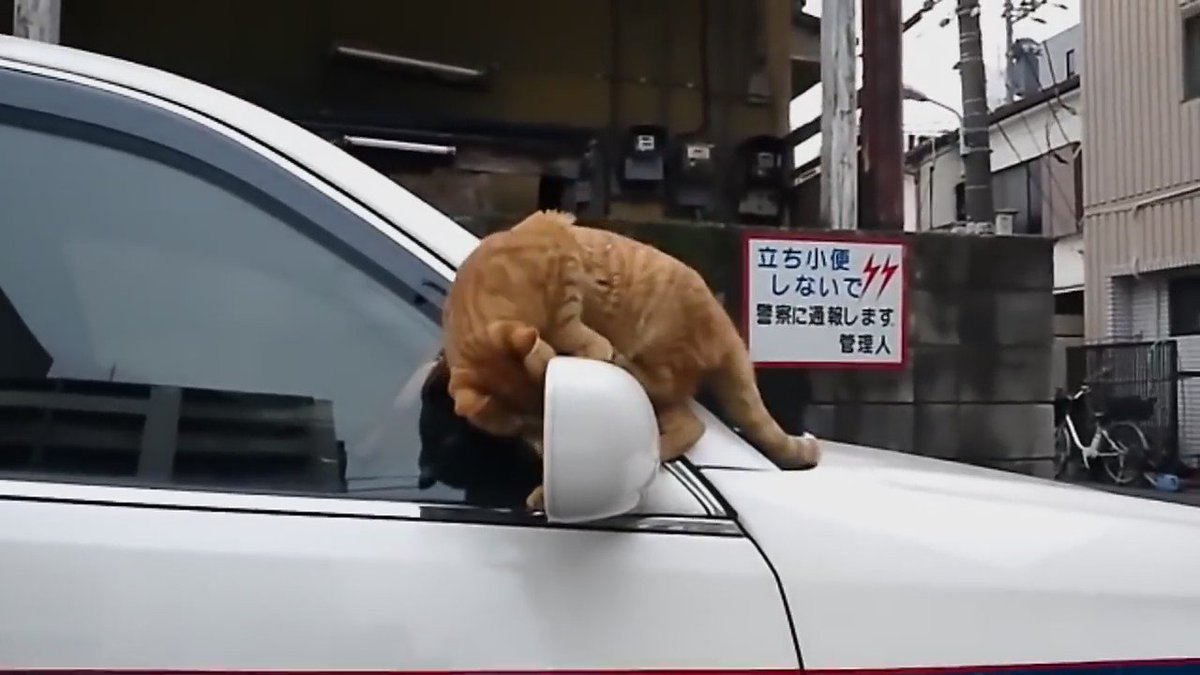 凄いとこを見せようとして失敗した猫の誤魔化し方があざとすぎる件w