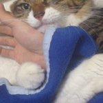 コンビニに行っただけで、寂しがって甘える猫が可愛すぎる!