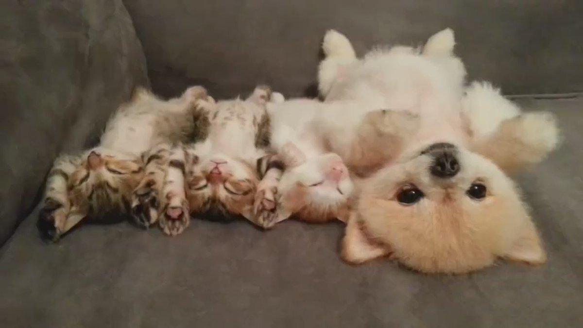 sleepy animals video