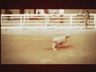 Defenda todos os animais. Chega de compaixão seletiva 27/11, as 11h00, em frente ao MASP https://t.co/psUtYPYeBV