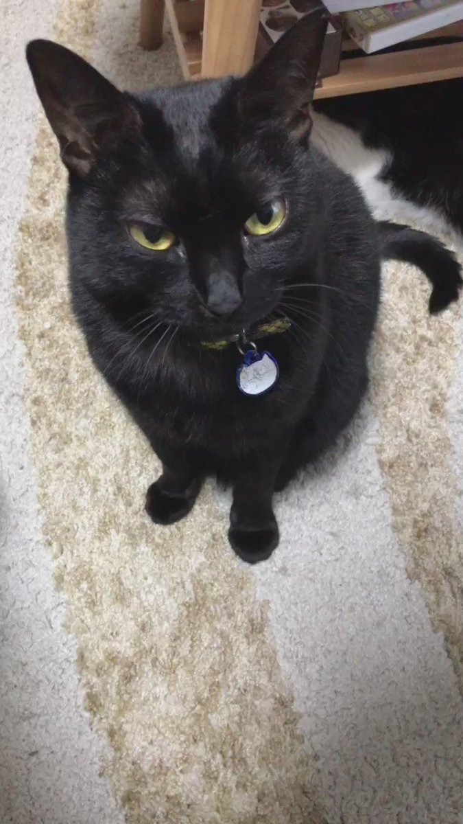 猫の愛情表現の一つに、ゆっくりの瞬きがあります。それがこれです。そう。それがこれです。 pic.twitter.com/pcnfOS6VA8
