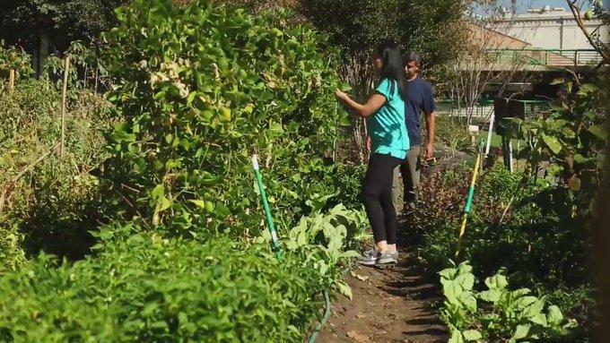 GARDENFRAME™: The World's Most Innovative and Elegant Garden