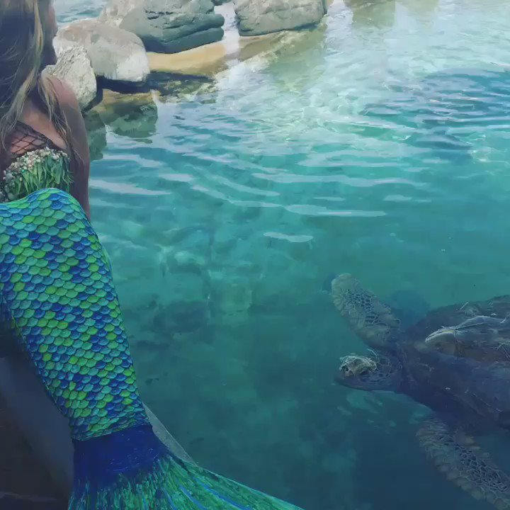 A sea turtle high five @RealSaltLife @CoralWorldvi #mermaid #realmermaid #saltlife #seaturtle #dude https://t.co/38BQDXHzCH