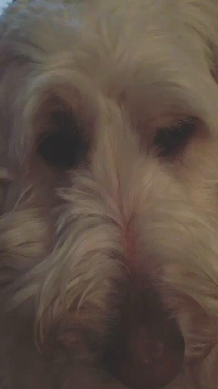 When your dog has better eyebrows than you https://t.co/Cv8eWFyl0R