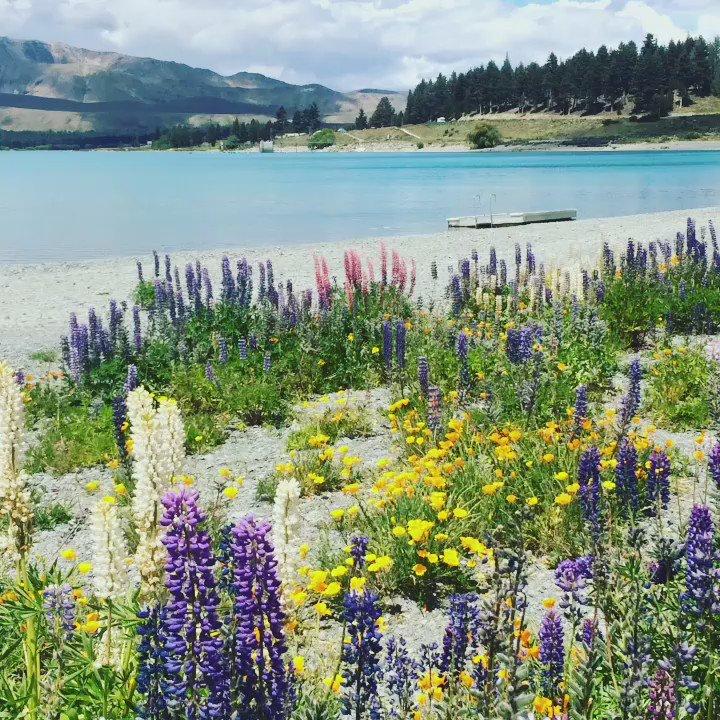 ここは天国かなって思うくらい綺麗なニュージーランドテカポ湖 https://t.co/mqNir6W2l8