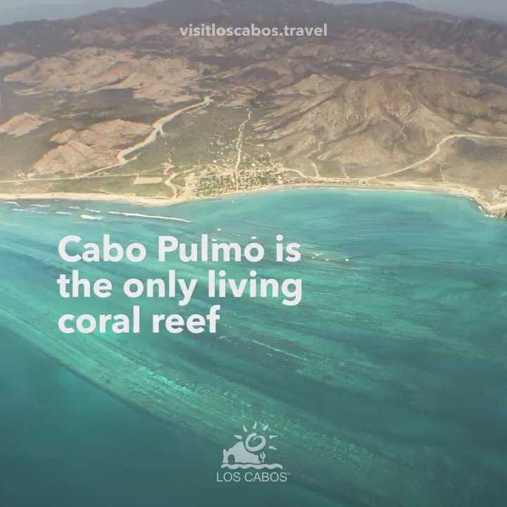 #CaboPulmo is the only living coral reef in #NorthAmerica, home to more than 220 species of fish and corals https://t.co/1NytZb51CQ