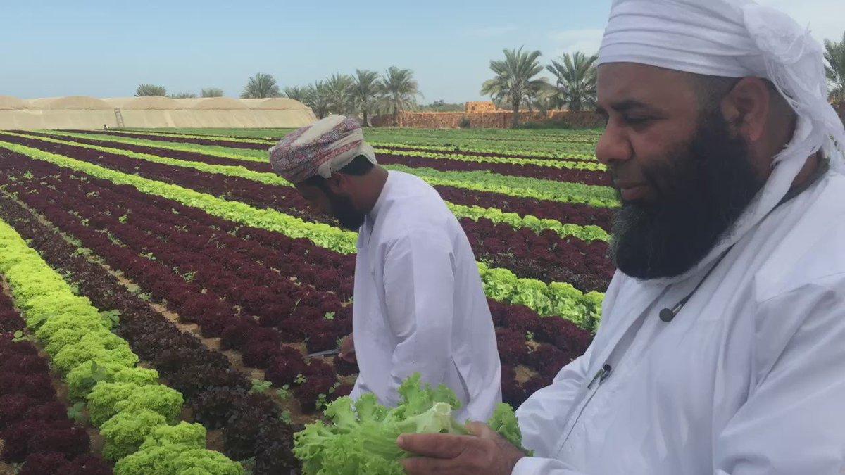 #خيرات_عمان   المحطة الرابعة مزرعة خميس الصالحي، اطلق عليه الشيخ ساعد الخروصي #المزارع_العملاق https://t.co/CMS1bagxU1