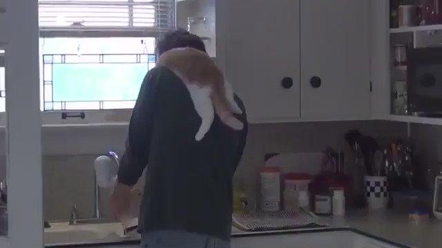 お父さんの洗い物を監視しちゃうネコ