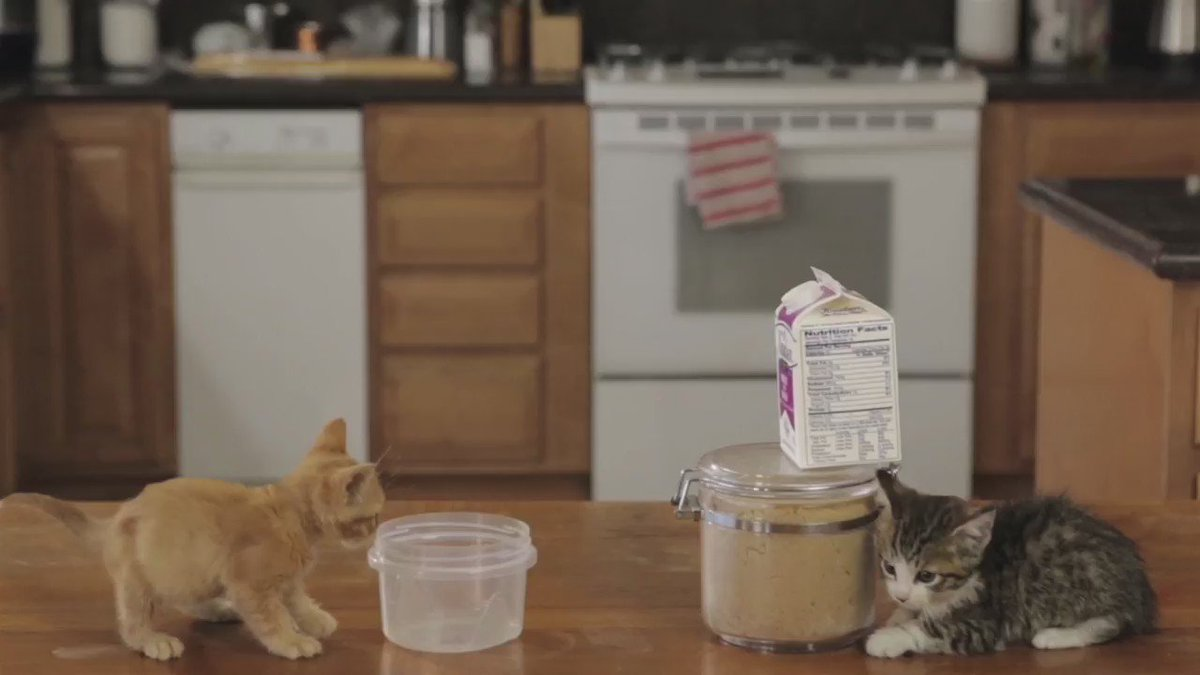Kittens are smarter than you think. #nationalmilkday https://t.co/kMja...