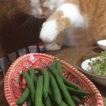 大好物のインゲンをつまみ食いする猫が可愛いと話題!