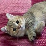 手をグーパーと動かす猫ちゃんが可愛すぎる
