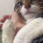 飼い主の腕を何が何でも離そうとしない、猫が可愛すぎると話題!
