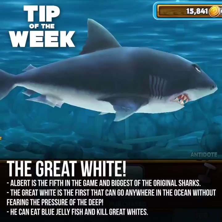 the killing evolution of the great white shark The great white is as large as he is dangerous being both slow moving and hard hitting the killer instinct satiated by the taste of any blood, evolutions that trigger on diver kills now also greater tail control allows the shark to change direction while lunging, making it harder for divers to land a shot.