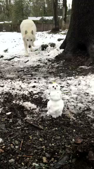 Wolf vs. snowman. https://t.co/rfJICFFQuT