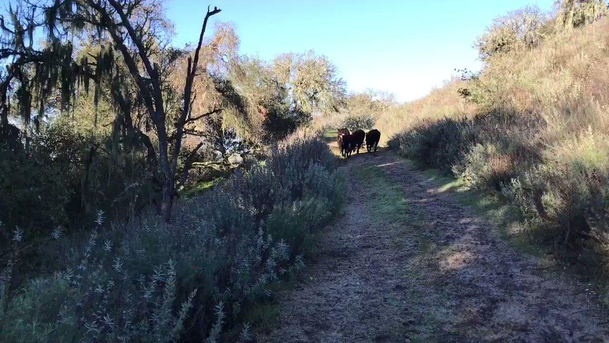 Running with the herd. https://t.co/zplhEgrKy1