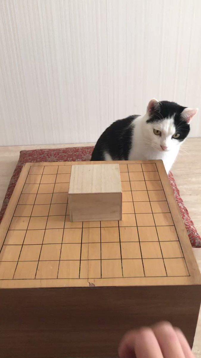 猫と将棋崩しやってみた#王将を取って満足 pic.twitter.com/edGmzi7w6L