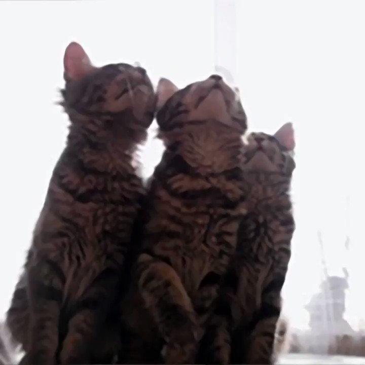 2月22日は #猫の日 とされています。公開データをもとに、その人気の高まりや種別のランキングをまとめてみました。あなたはどんな猫が好き? ...